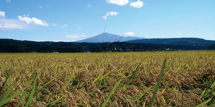 dewatsuru01